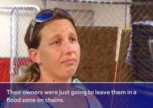 https://www.wcvb.com/article/woman-may-face-charges-for-sheltering-pets-during-hurricane-florence/23354930